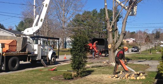 Webster Tree Service in Auburn, ME