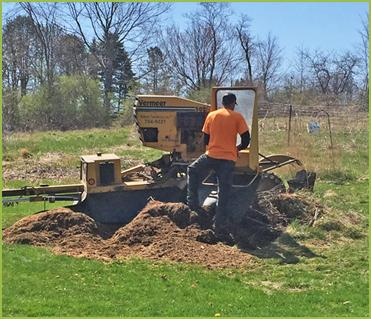 Webster Tree Service provides reliable and efficient stump grinding services in Auburn, ME